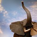 Talking Elephant by Marilyn Hunt