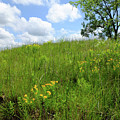 Tall Grass Hillside by Scott Kingery
