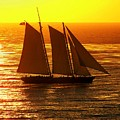 Tangerine Sails by Karen Wiles