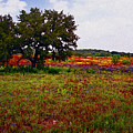 Texas Wildflowers by Tamyra Ayles