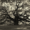 The Angel Oak by Susanne Van Hulst