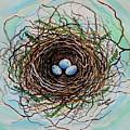The Botanical Bird Nest by Elizabeth Robinette Tyndall