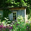 The Cabin by Nick Diemel
