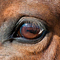 The Equine Eye by Terry Kirkland Cook