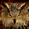 The Eyes by Jacky Gerritsen