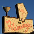 The Flamingo by Troy Montemayor