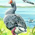 The Goose  by Antony Galbraith
