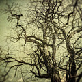 The Haunted Tree by Lisa Russo