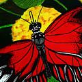 The Monarch by Ramneek Narang