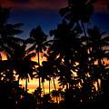 The Palm Jungle