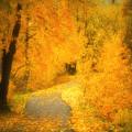 The Pathway Of Fallen Leaves by Tara Turner