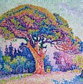 The Pine Tree At Saint Tropez by Paul Signac