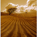 The Ploughed Field by Mal Bray