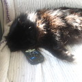 The Remote Is Occupied by AJ Brown