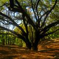 The Sacred Oak by David Lee Thompson