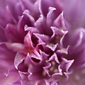 The Softest Touch by Barbara  White
