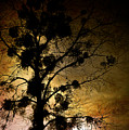 The Sunset Tree by Loriental Photography
