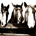 The Three Amigos In Sepia by Steve Shockley