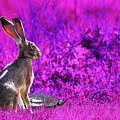 The Tortoise And The Hare . Magenta by Wingsdomain Art and Photography