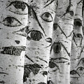 The Trees Have Eyes by Wim Lanclus