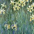 The Yellow Irises by Claude Monet