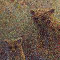 Three Bears by James W Johnson