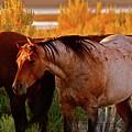 Three Horses Of A Suspicious Corral by Gus McCrea