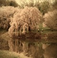 Through The Years - Holmdel Park by Angie Tirado