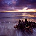 Tide Driven by Mike  Dawson