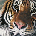 Tigger by Barbara Keith