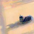 Tiny Kitten Big Dreams by Kimberly Santini