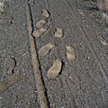 Tire Tracks and Foot Prints Poster by Heather Kirk