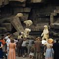 Tourists Watch Captive Polar Bears by B. Anthony Stewart