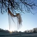 Transparent Fabric by Bernard Jaubert