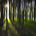Tree Abstract by Avalon Fine Art Photography