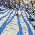 Tree Shadows Morzine by Andrew Macara