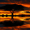Tree Silhouette And Dramatic Sunset by Anna Om