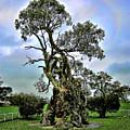 Treehouse by Douglas Barnard