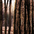 Trees Gathering by Wim Lanclus