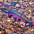 Trout Stream by Terril Heilman