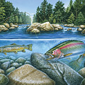 Trout View by JQ Licensing