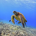 Turtle by Chris Stankis
