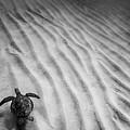 Turtle Ridge by Sean Davey