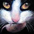 Tuxedo Cat With Mouse by Svetlana Novikova