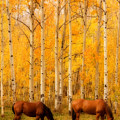 Two Horses In The Autumn Colors by James BO  Insogna