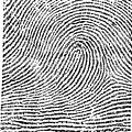 Typical Loop Pattern, 1900 by Science Source