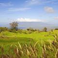 Ulupalakua Landscape by Ron Dahlquist - Printscapes