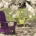 Under The Magnolia Tree by Tom Mc Nemar