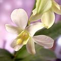 Unique White Orchid by Mike McGlothlen