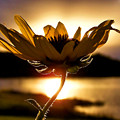 Uplifting by Karen M Scovill
